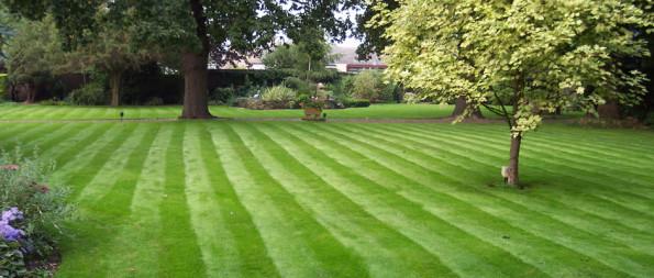 striped lawn pl